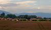 Clover Field 01_DSC2781 (2005-07-10)