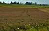 Clover Field 02_DSC2804 (2005-07-10)