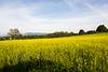 Photos of Colza field near Chemin de Machéry