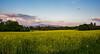2014-04-23 Pregny Colza Field