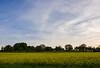 2014-04-24 Pregny Colza Field