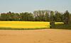 Colza Field 14_DSC2492 (2005-05-11)