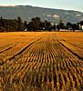Ploughed Field 05_DSC2996 (2005-07-20)