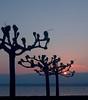Sunset - Hermance 02 CP5k DSCN1472 (2004-04-11)