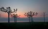 Sunset - Hermance 04 CP5k DSCN1473 (2004-04-11)