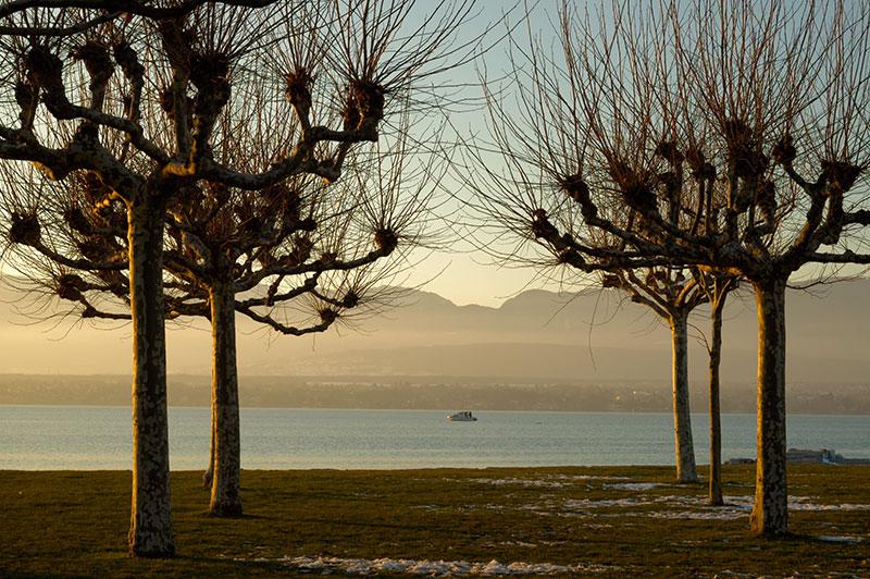 Sunset - Hermance 06_DSC1734 (2007-01-28)