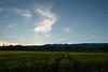 Sunset and Colza field near Satigny station