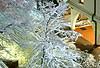 Snowy Tree 01_DSC1626 (2007-01-24)
