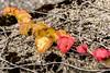 Fall photos from Chemin de Bahyse-Dessus (near Grandvaux)