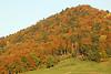 Hillside in Autumn - Le Signal - Grandvaux_DSC1720 (2004-10-24)