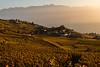 Sunset in fall over the vineyards near Grandvaux