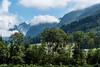 Trees & Foggy Mountains