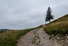 Tree & Hikers