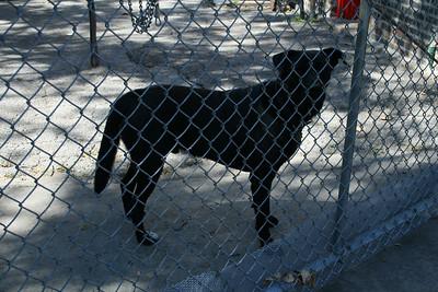 House dog at Eng.115's