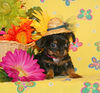 SOLD TO: LEZLIE P. From Michigan<br /> PUPPY NUMBER ( TT-CHI-190-G-1 )<br /> BREED: Chihuahua<br /> SEX: Female<br /> COLOR: Black & Tan<br /> SIZE: Very Tiny Tiny Little Teacup