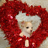 X Sold to Elizabeth Doherty 3-22-06 Puppy Number ( # CHI FEB 57 )<br /> Breed: Chihuahua<br /> Size: Toy<br /> Sex: Female<br /> Color: White with Tan markings<br /> Price: $975.00<br /> Personality: She is a quiet little girl that plays well by herself or with other animals or children. She likes everyone and is very sociable over all. She appears to be quite smart and should finish training very easily. She is slightly more advanced in training than others her age.