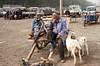 Kashgar - The animal market (1)