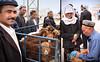 Kashgar - The animal market (6)