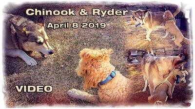 Chinook Ryder_1