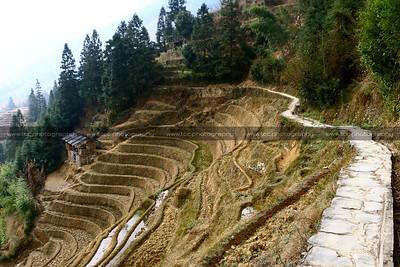 Longji Rice Terraces, Guilin, Guangxi, China