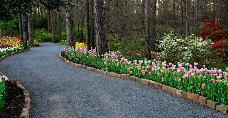 Winding Pathway - Garvan Woodland Gardens - Hot Springs, Arkansas - March 9th, 2017
