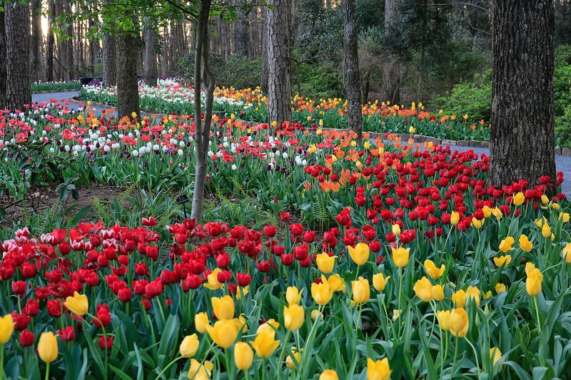Easter Egg Beauty - Garvan Woodland Gardens- Hot Springs, Arkansas - March 9th, 2017