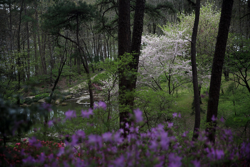 From Shadow Into Light - Garvan Woodland Gardens - Hot Springs, Arkansas - Spring 2019