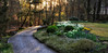 Sunkissed Gardens - Garvan Woodland Gardens - Hot Springs, Arkansas - March 9th, 2017