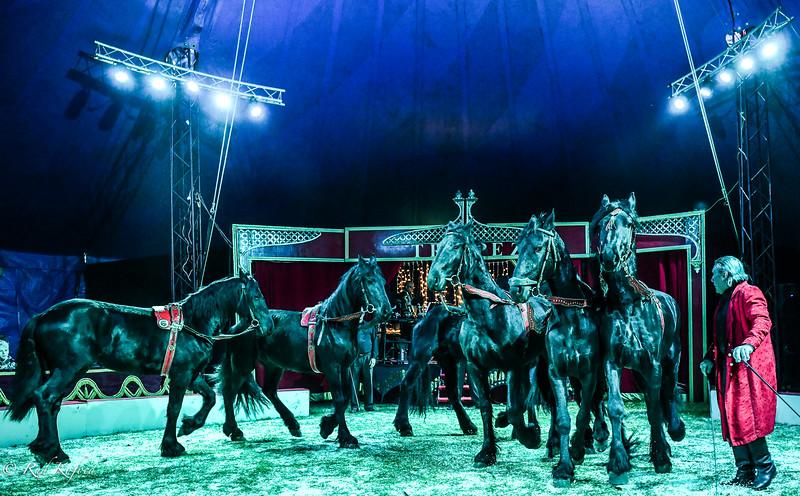 Heste skal der til i en cirkus...