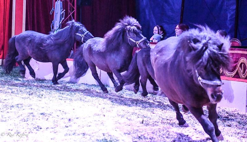 Ponyerne er et sikkert hit hos børnene...