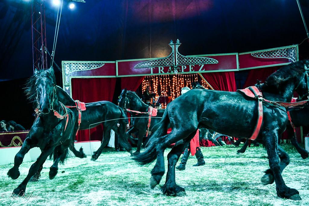 De seks nye frieserhingste er under oplæring under domptøren og cirkusdirektøren  Bernhard Kaselowsky's kyndige ledelse