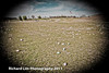 2011-Howell-Marshmallow-Drop-0424