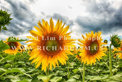 RLIM1717-Edit
