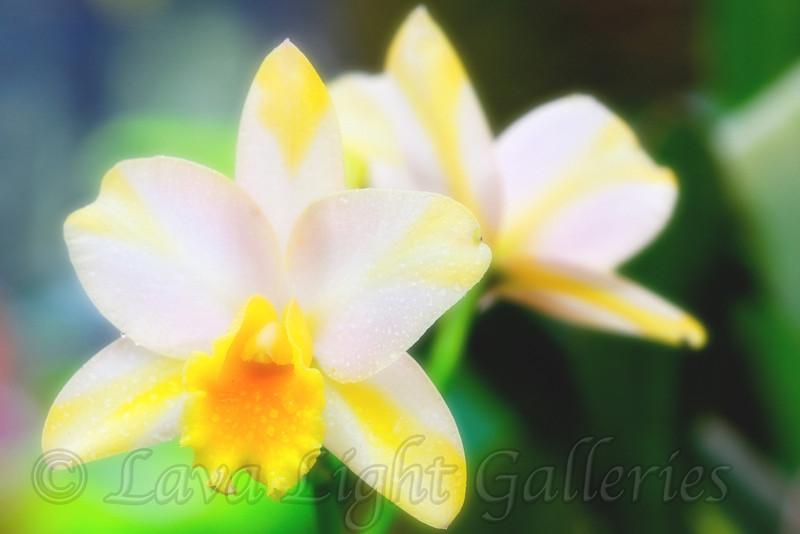 Amandas Flowers