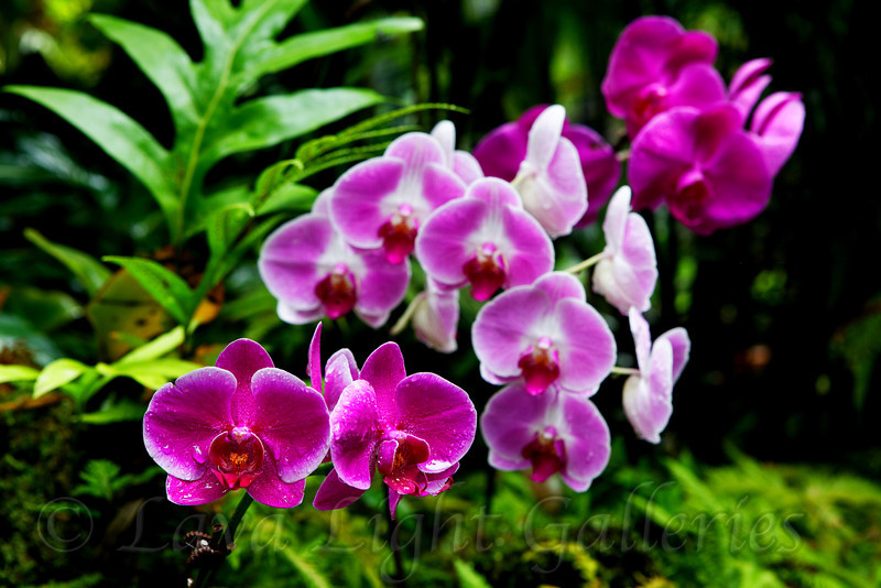Basil's Orchids