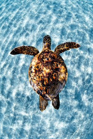 Turtle_Over_Sand