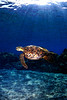 Turtle_In_The_Light
