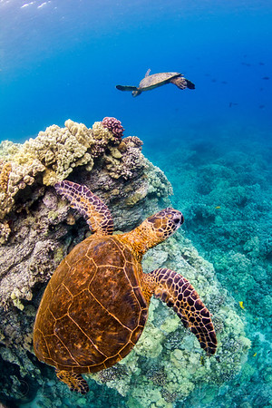 Turtle_Two_0353