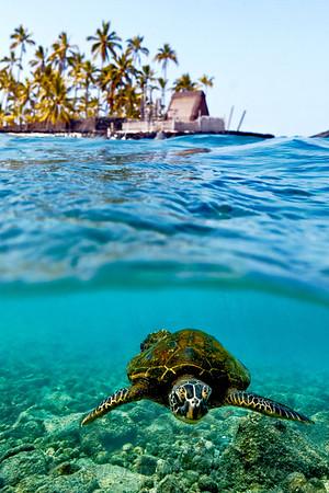 Turtles_Refuge