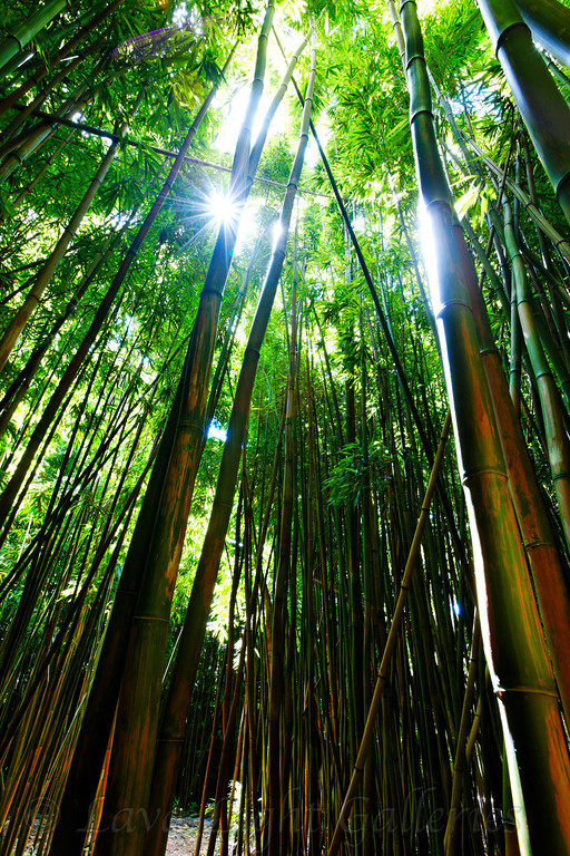 Starburst Bamboo