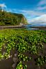 Waipio Flowers_CJK9094
