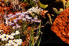 Zion_Flowers