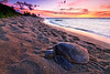 Turtle_at_Rest