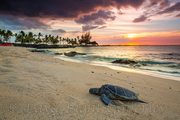 Turtle_Paradise