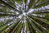 Trees, Cannon Beach, Oregon