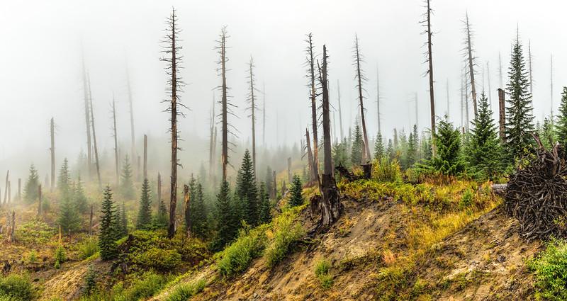 Mt St Helens Blast Zone - Washington