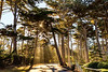 Monterey, California - 17 Mile Drive