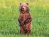 April 2020, Grizzly Cub - 1024x768