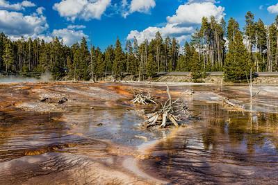 Bacteria - Fountain Paint Pot Nature Trail