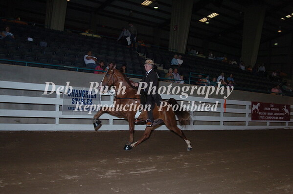 CLASS 34 AGED MARES & GELDINGS OPEN SPECIALTY